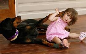 Mẹ hốt hoảng khi chó doberman vừa nhận nuôi tha con gái nhỏ ném đi xa cả mét, nhưng hóa ra đó là hành động anh hùng