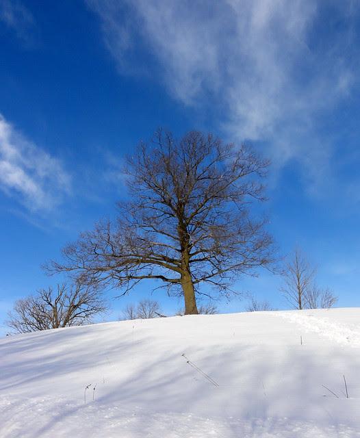 [2011-02-13] MN Landscape Arboretum_0010