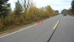 pheasants crossed the road