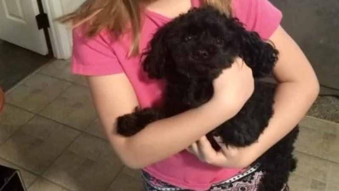 Un heroico perrito de 2 kilos sacrifica su vida por salvar a su familia del ataque de un oso