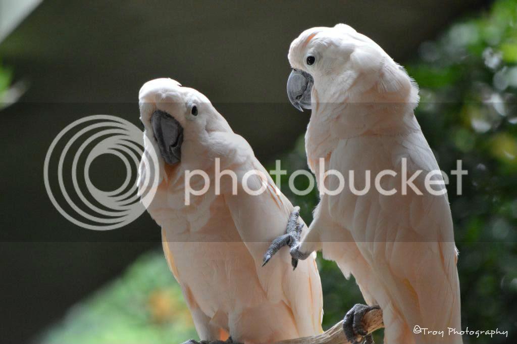 colorful parrots photo: e8d6a264 ffcdcc96.jpg