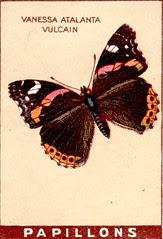 papill 11