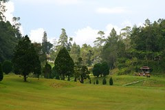 Fraser's Hill IMG_1939 by tk_yeoh