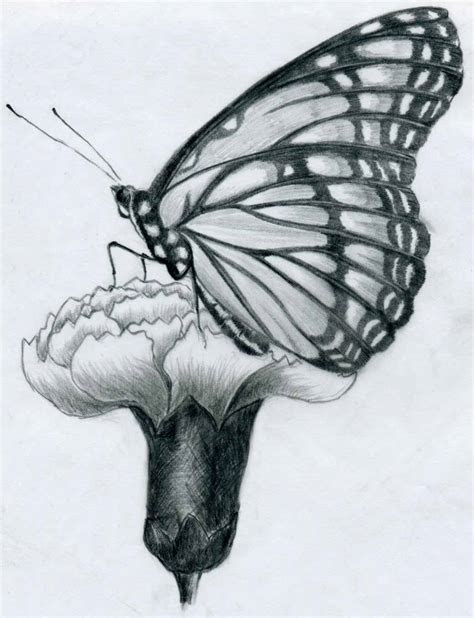 butterfly pencil drawings   practice