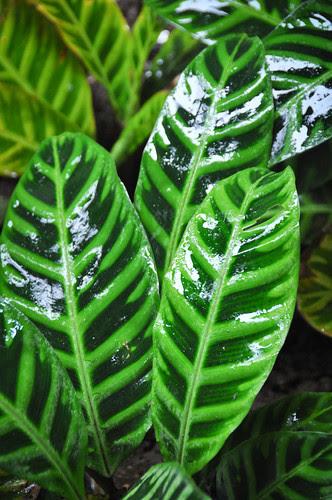 2011DSC_0413Costa Rica.jpg