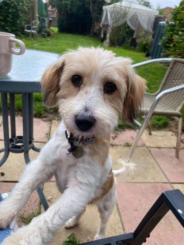 Wanda – 12 year old female Terrier Cross