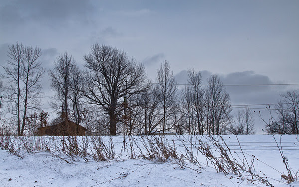 bare-limbed trees, stark, snow