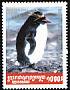 Southern Rockhopper Penguin Eudyptes chrysocome