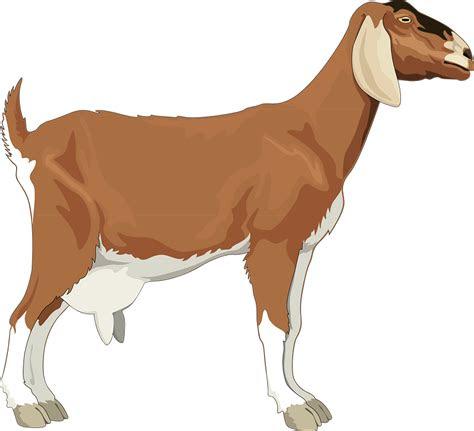 perempuan kambing brown gambar vektor gratis  pixabay