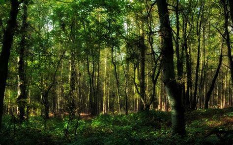 forest hd wallpaper