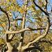 Árboles en La Fuensanta