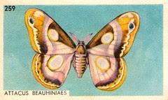 papillon 015