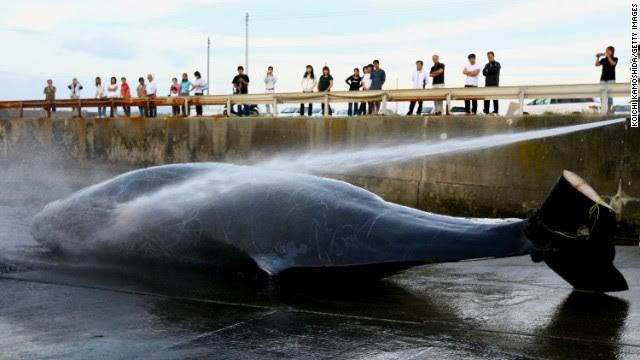 Corte de la ONU ordena a Japón detener la caza de ballenas