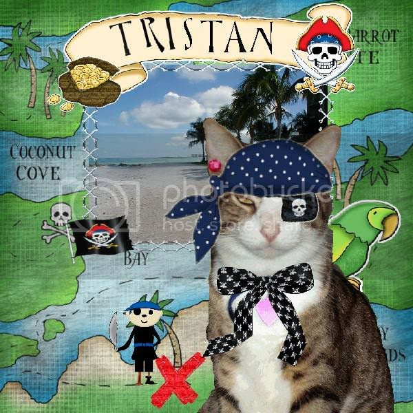Sir Tristan,Tabby Cat,Domestic Cat,Pirate