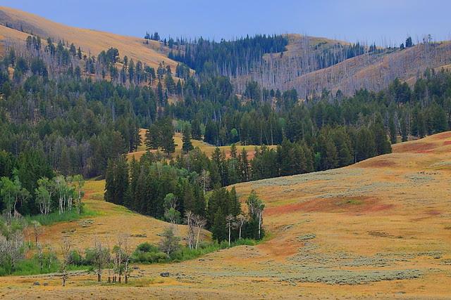 IMG_4950 Autumn Mosaic, Yellowstone National Park