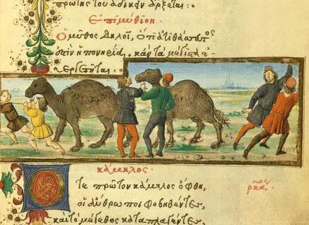 Camelus (de familiaritate)