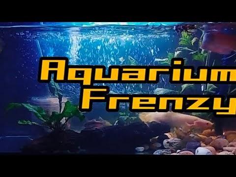 Aquarium Frenzy | Night Mode