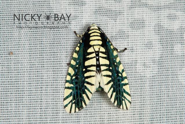 Moth - DSC_5412