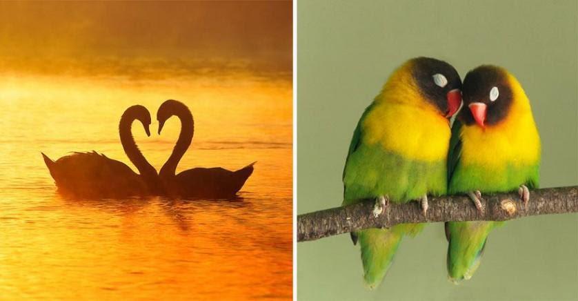 fatos interessantes amor