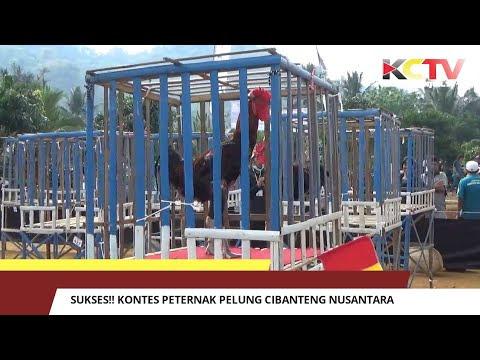Sukses!! Kontes Peternak Pelung Cibanteng Nusantara