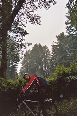 Cycling around the Marin Redwoods