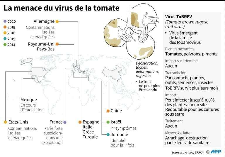 Virus destructeur sur les tomates et les poivrons à quelques jours du Salon de l'Agriculture.