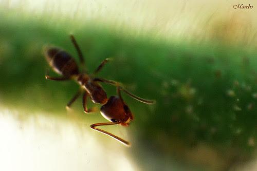 El mundo de las hormigas. by Alejandro Bonilla