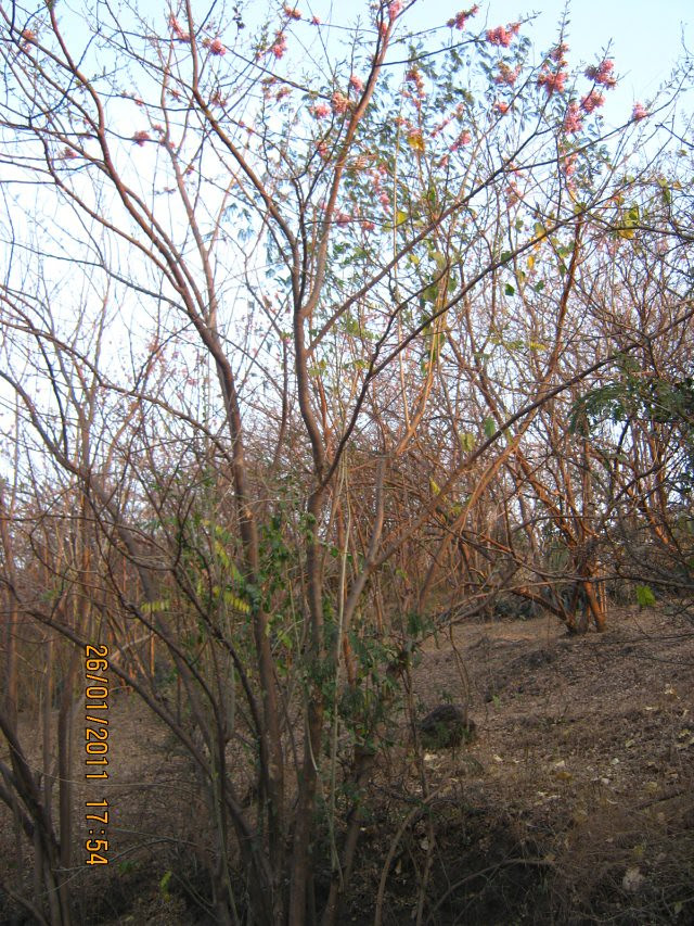 Megapolis is surrounded by reserved forest  - Megapolis on 26th January 2011