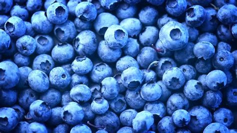 Blueberry Background. Fresh And Ripe Organic Blueberries