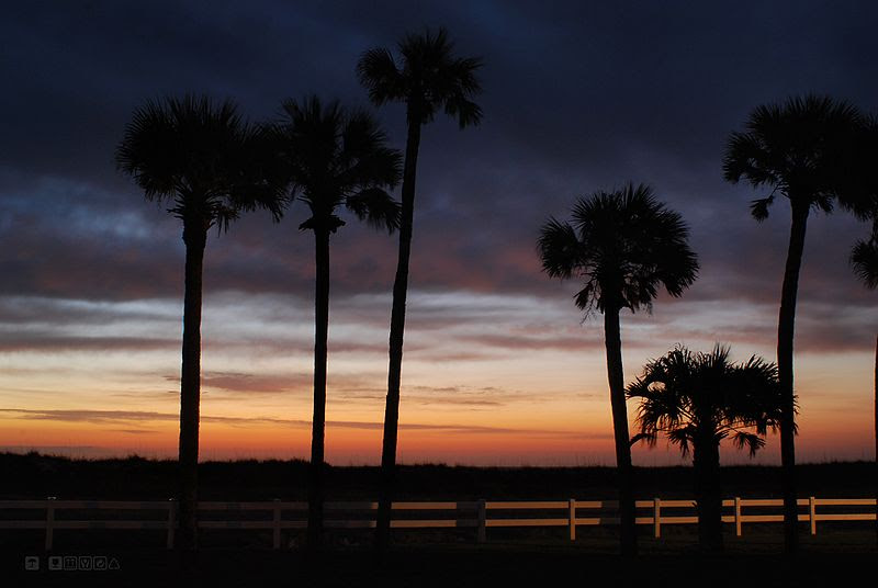 File:Sunrise JAX and palms.jpg