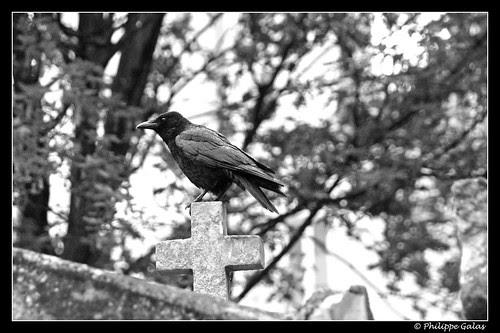 Le corbeau et la croix