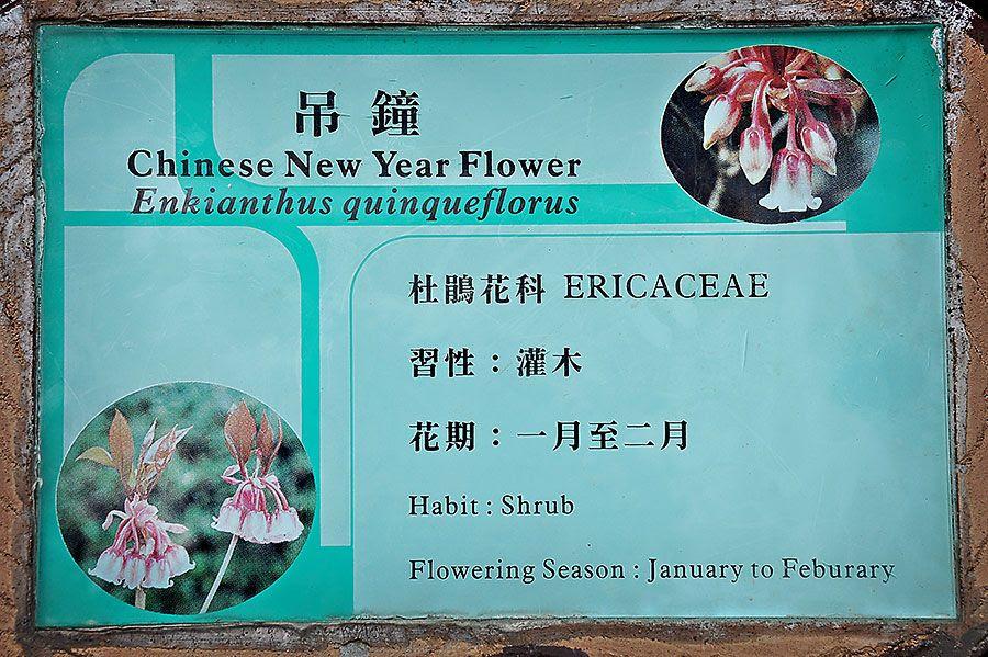 CNY-flowers.jpg 1.11