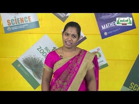 கலைத்தொழில் பழகு Std 11 TM Economics அங்காடி அமைப்பும் விலை நிர்ணயமும் Kalvi  TV