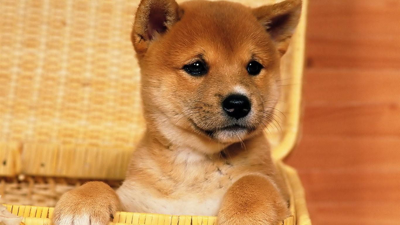 1600犬の写真の壁紙 8 9 1366x768 壁紙ダウンロード 1600犬の