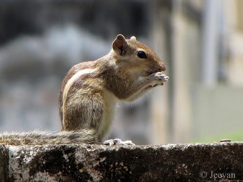 Munching squirrel!