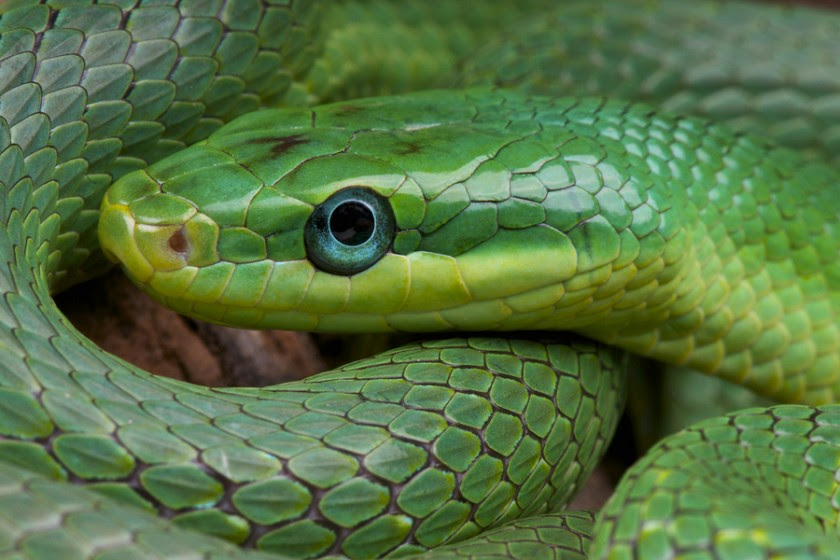 Keeping a Snake as a Pet? Here are the Important Factors ...