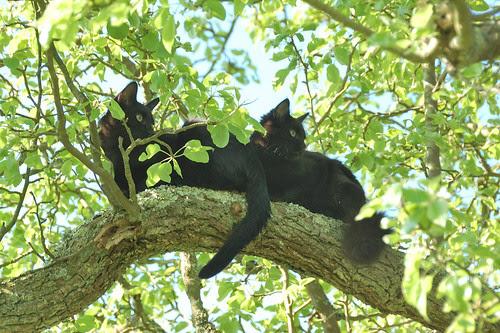 kittens in a tree