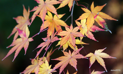 un poco más de otoño 25-11-2010 18-36-58