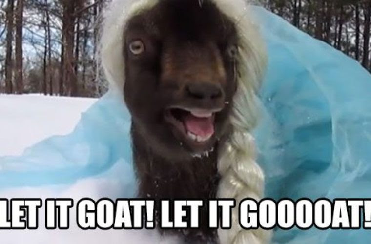 Let It Goat Funny Pictures Quotes Memes Funny Images Funny