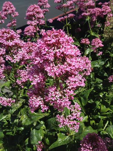 April 23: Purple Flowers