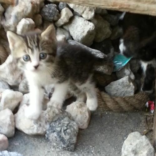 Socorren a una gata salvaje temerosa – Dos meses después ella les presenta a sus bebés