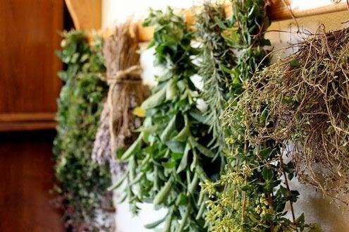 Drying Herbs - Bob V