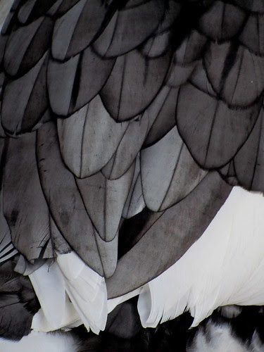 Visto en un pato by JoseAngelGarciaLanda