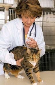 64333-210x314-rabiesvaccineforcats