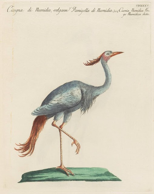 drawing of a pink-headed stork standing on one foot