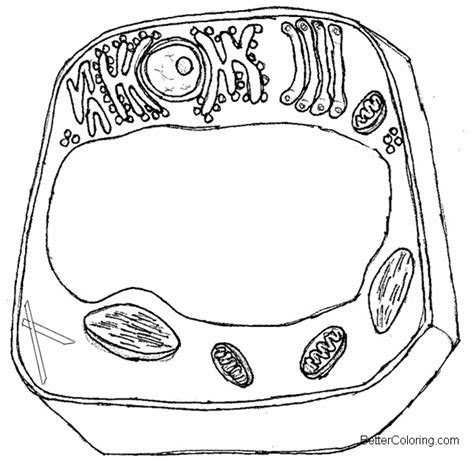 simple animal cell coloring pages  printable