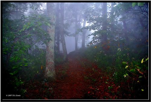 A Misty Morning Hike