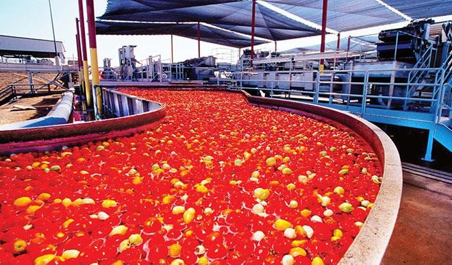 Image result for Dangote tomato factory to resume production February