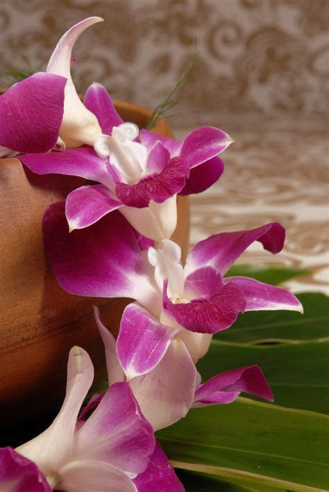 Orchid Lei with Spacers   Flower Leis