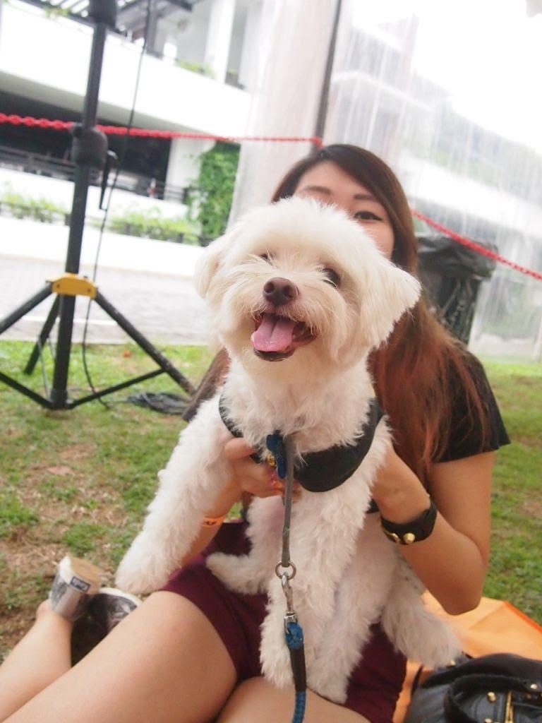 photo Pets Picnic 2016 4.jpg